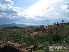 20000, Raleigh Peak, Pine