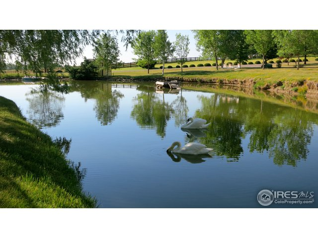 Pond with Swan