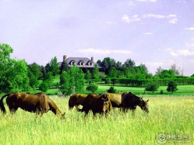 Hilltop House Horses
