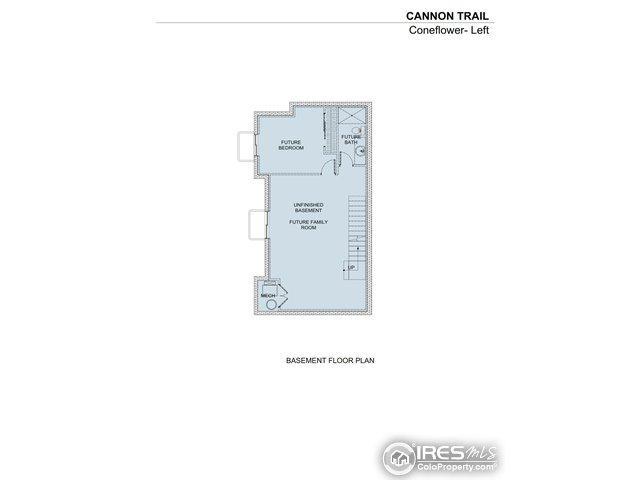 Coneflower basement