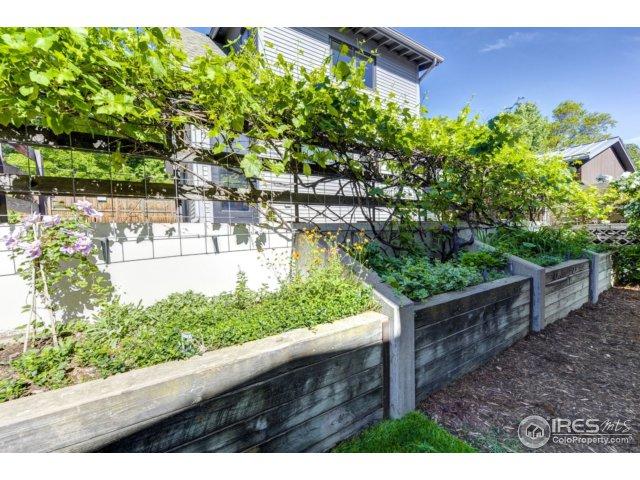 Garden beds & Grape vines!