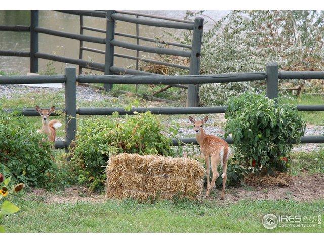 Regular visitors on the farm